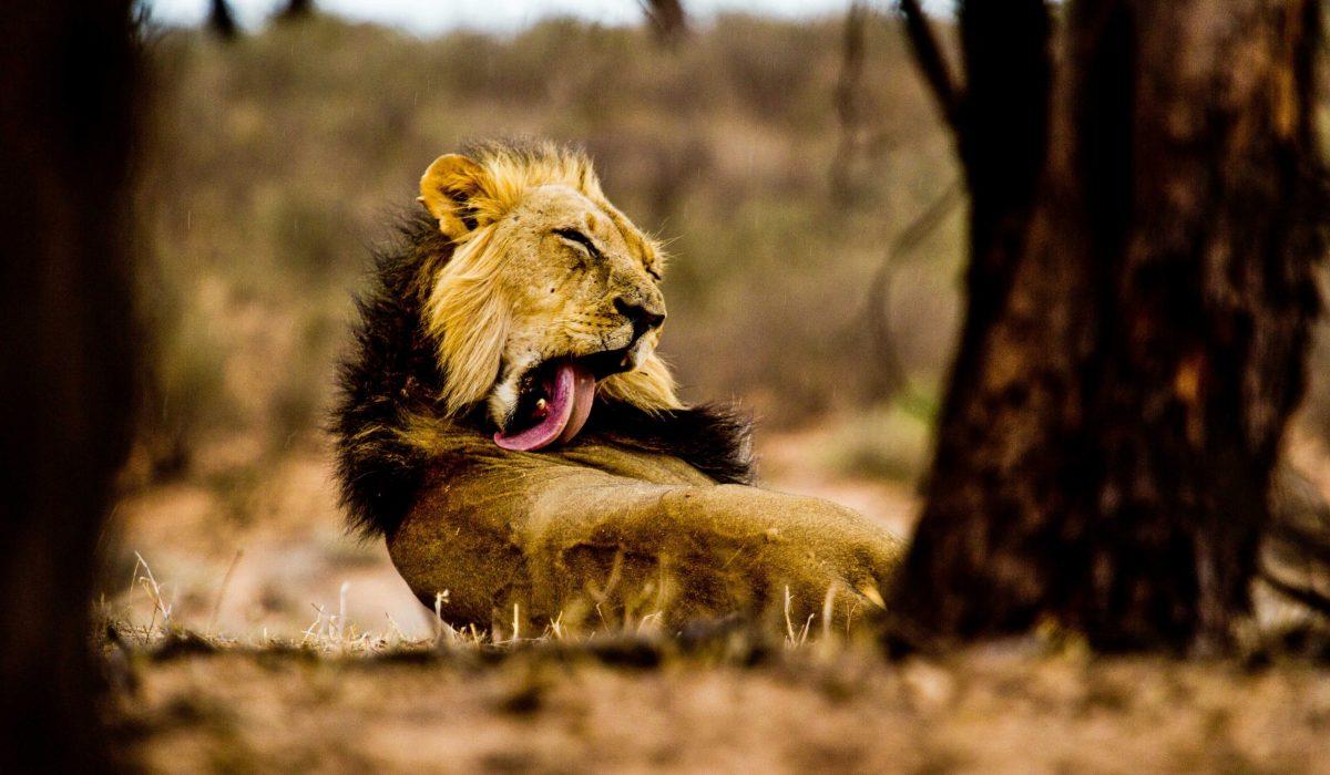Central Kalahari Game Reserve