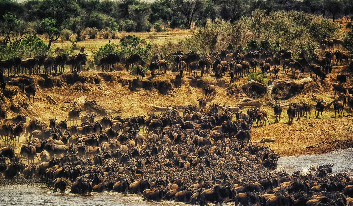 Masai Mara migratie