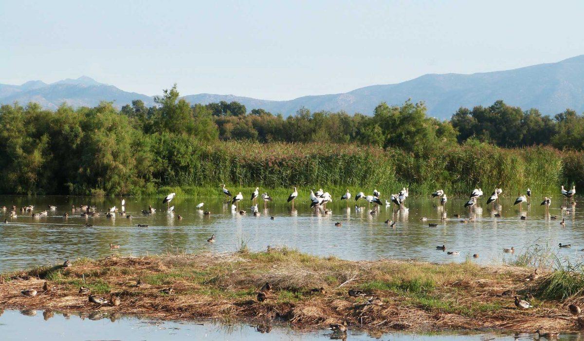 Parc Natural de L Aiguamolls de L Emporda