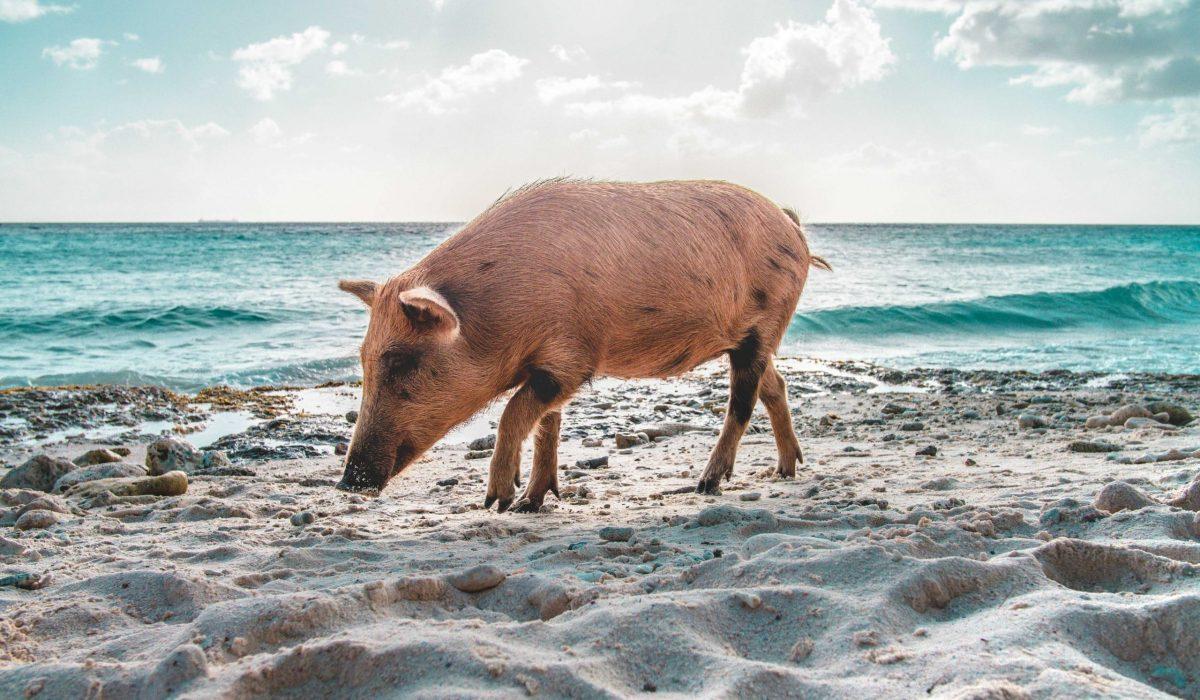 Playa Port Marie