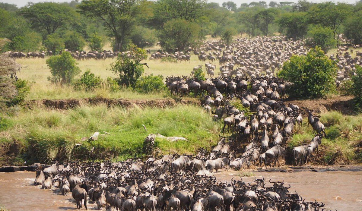 Serengeti migratie