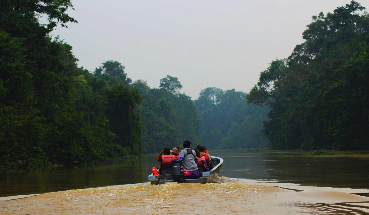 Sukau Rainforest