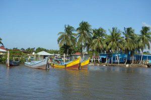 Suriname boten palmbomen