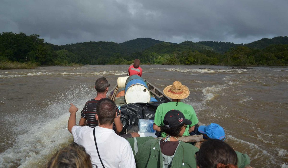 Jungle van Suriname