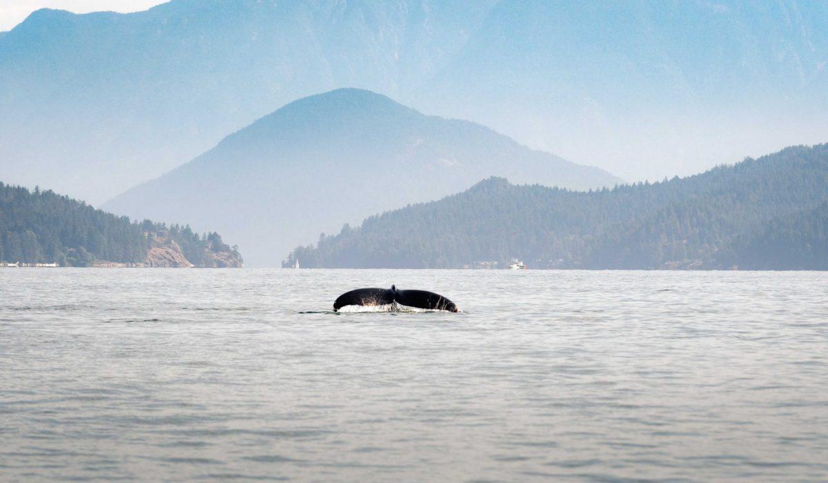 Tofino Ucluelet walvis